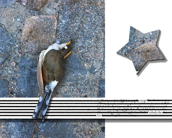 Tenth spread of Inspirations. Dead bird with a star eye. A star-filled with stone opposite it. An erasure poem is at the bottom